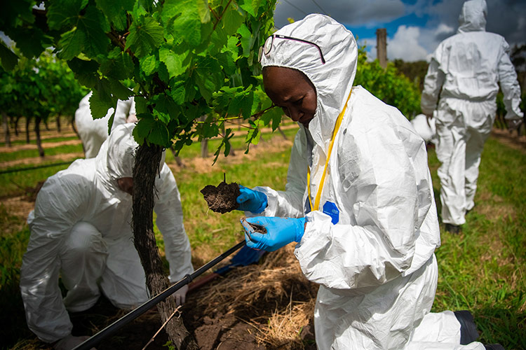 woman in biosuit inspects vine roots